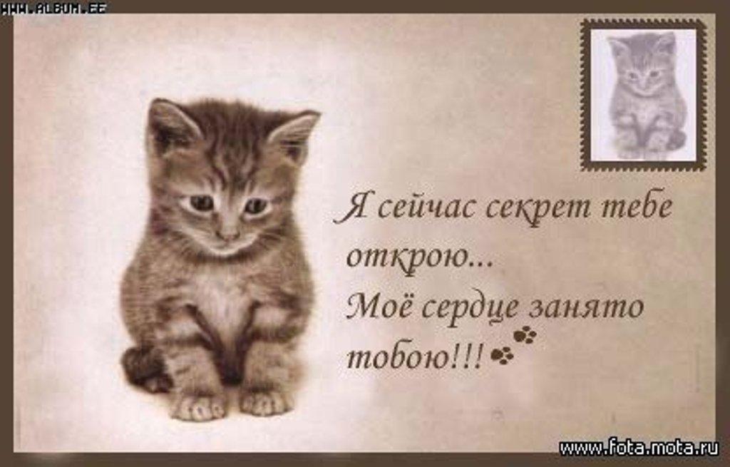 http://cvid.ru/pics/20415/4-1-.jpg